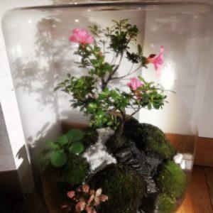Bonsaï azalée en fleurs Vue principale, Terrariums créations végétales Lille Nat&Sens