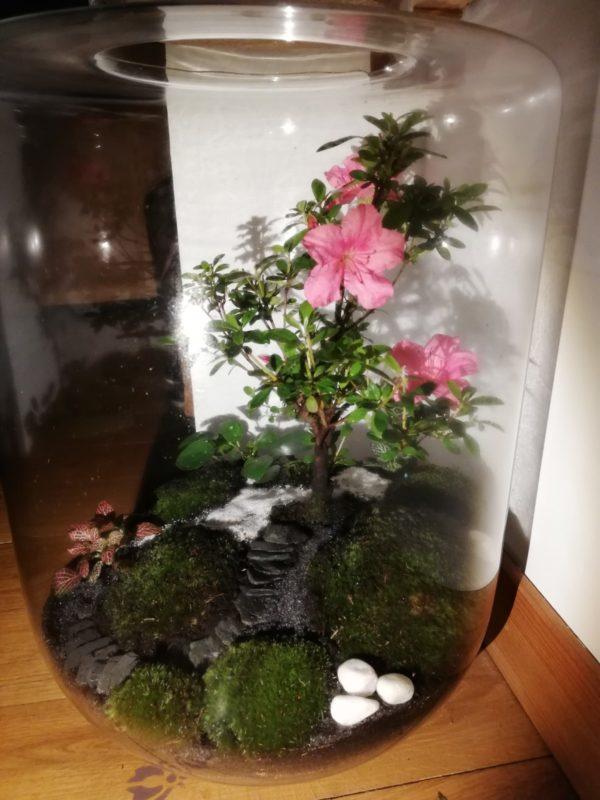 Bonsaï azalée en fleurs Vue 1, Terrariums créations végétales Lille Nat&Sens