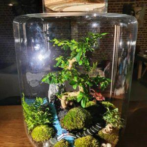 Jardin japonais Bonsaï Carmona Vue principale, Terrariums créations végétales Lille Nat&Sens