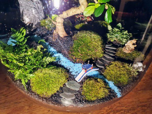 Jardin Japonais Bonsaï Carmona Vue 2, Terrariums créations végétales Lille Nat&Sens